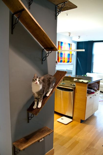 reclaimed barn boards to create shelves that the cats can jump on and climb up and around to the kitchen.