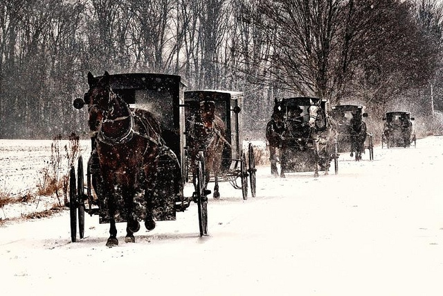 Mennonites - a winter morning in Ontario