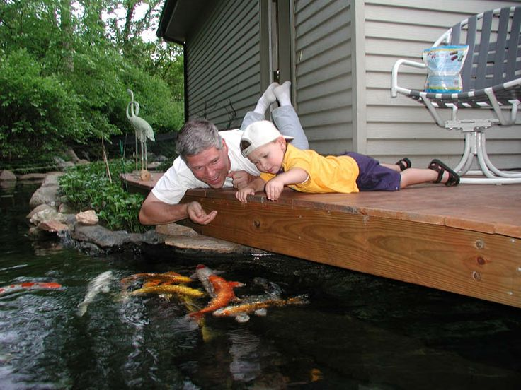 36 best images about ponds on pinterest pond ideas for Koi pond deck