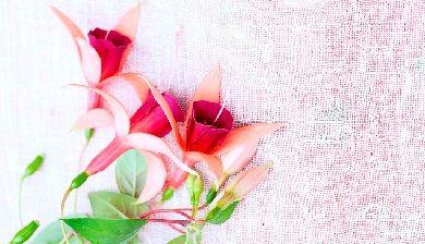 Feesten met Fuchsia - FemNa40