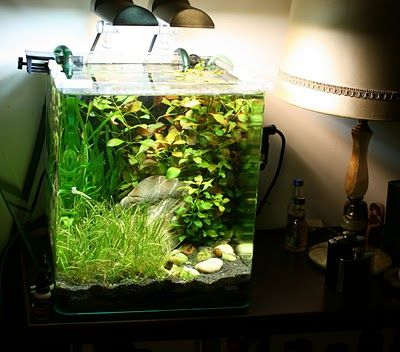 dennerle nano cube 30 complete double lite aquascaping ideas pinterest aquariums. Black Bedroom Furniture Sets. Home Design Ideas