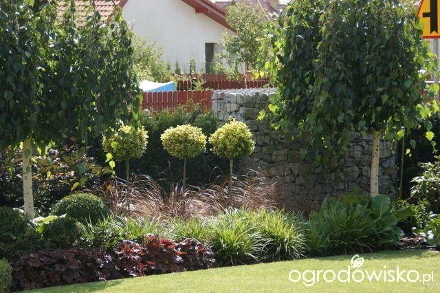 Madżenie ogrodnika... Kiedyś tu.... - strona 1483 - Forum ogrodnicze - Ogrodowisko