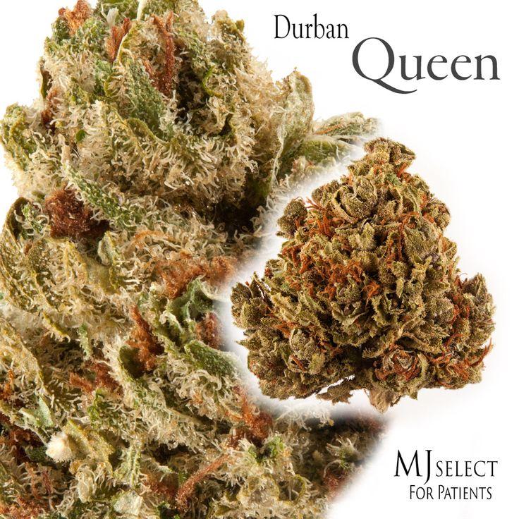 Durban Poison x Space Queen - Sativa -