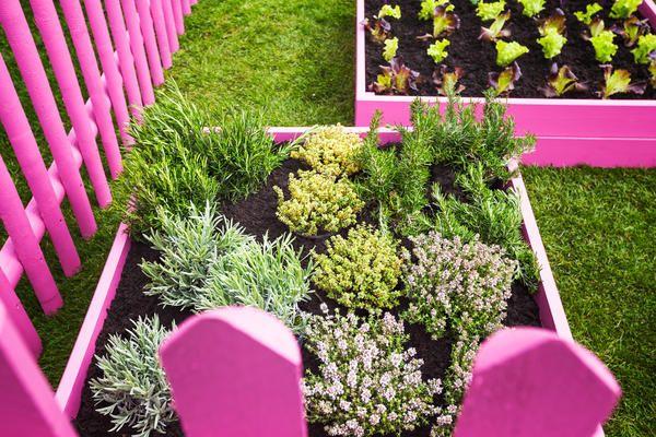 Коли есть потребность в лекарственных травах - нужно создавать на своем участке настоящий аптекарский огород