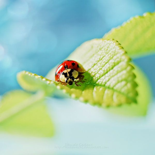 how to get rid of ladybugs in house