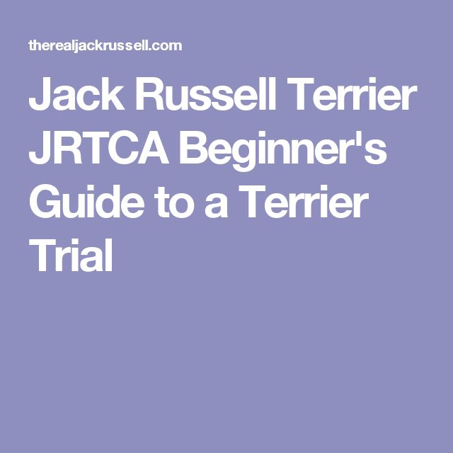 Jack Russell Terrier JRTCA Beginner's Guide to a Terrier Trial