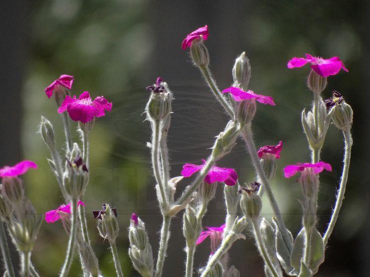 Backlit wildflowers in a summer garden