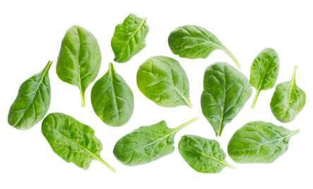 Many people are afraid of eating too many greens because they have heard the possible dangers of eating too much oxalic acid.  Greens, like certain plant foods are high in oxalic acid.  You might already guess my stance on this controversy but just