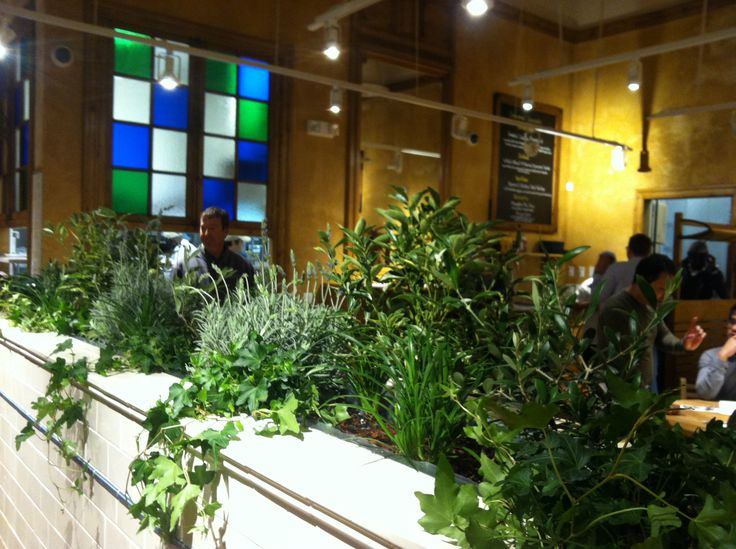 Indoor plants at our Mosaic District, VA location, for relaxing green scenery all year round!