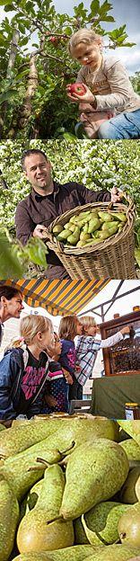 - Philips fruittuin en pannenkoekenhuis Eindhoven