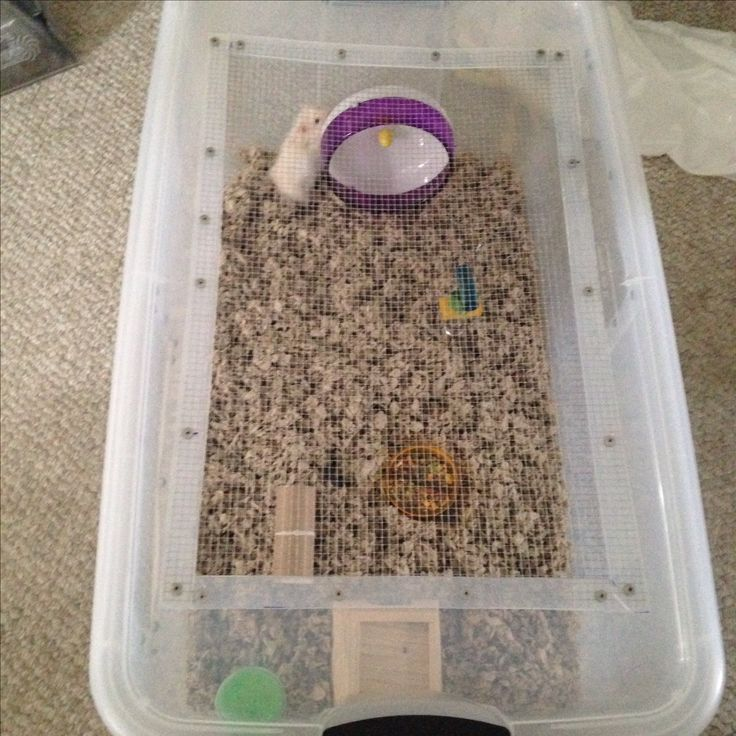 DIY hamster cage. Made from large plastic bin. Much more affordable than a large aquarium!