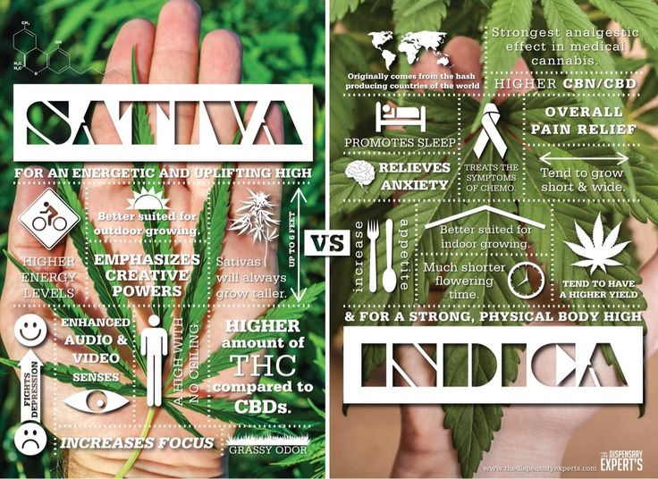A good representation of the difference between Indica and Sativa - Imgur