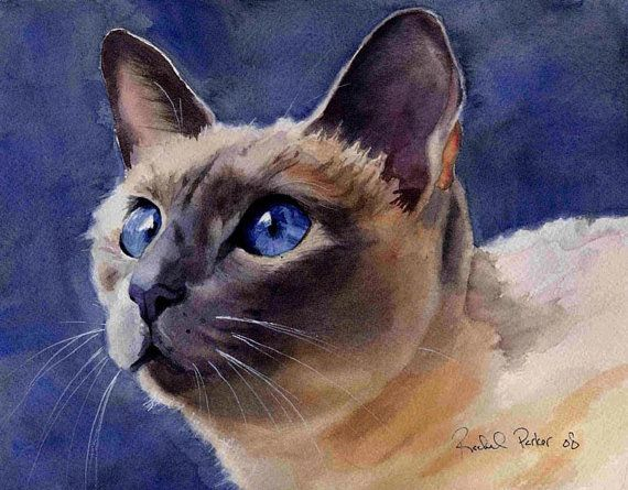 Lilac Traditional Applehead Siamese Cat Art Print of my watercolor painting