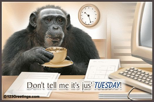 Good Morning Happy Tuesday | Tuesday Wishes Images, Tuesday Wishes Pictures, Scraps for Orkut ...