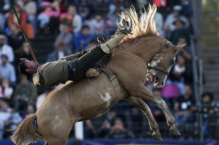 Seorang pria menaiki kuda liar dalam perayaan acara tahunan 'Criolla' di Montevideo, Uruguay.