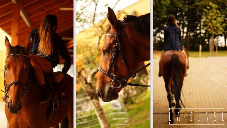 horses#sopot#la sense#roxana#