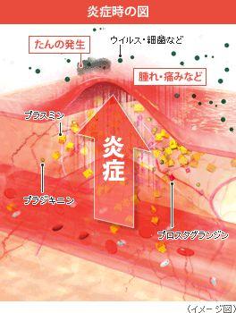 なんかむっちゃ炎症してるのが伝わる。 :炎症時の図
