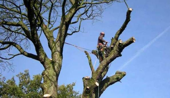 tree surgery techniques.