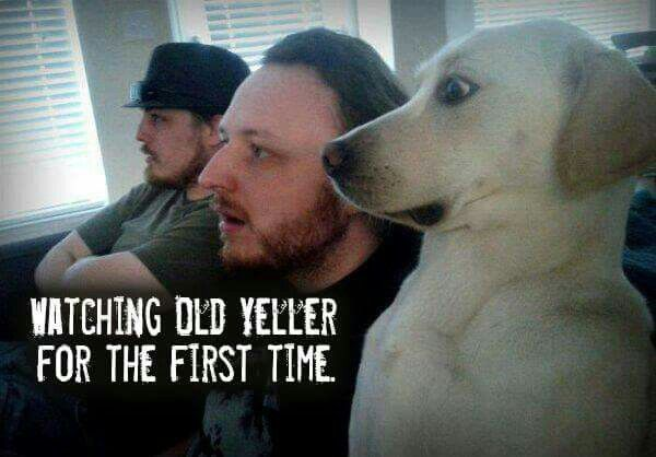 Dog's reaction to Old Yeller