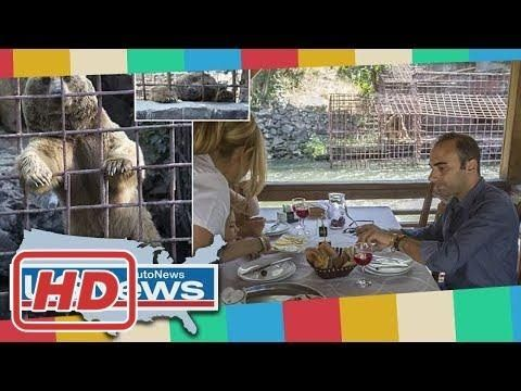 News Dailymail - Starving bears beg for scraps at a restaurant in Armenia