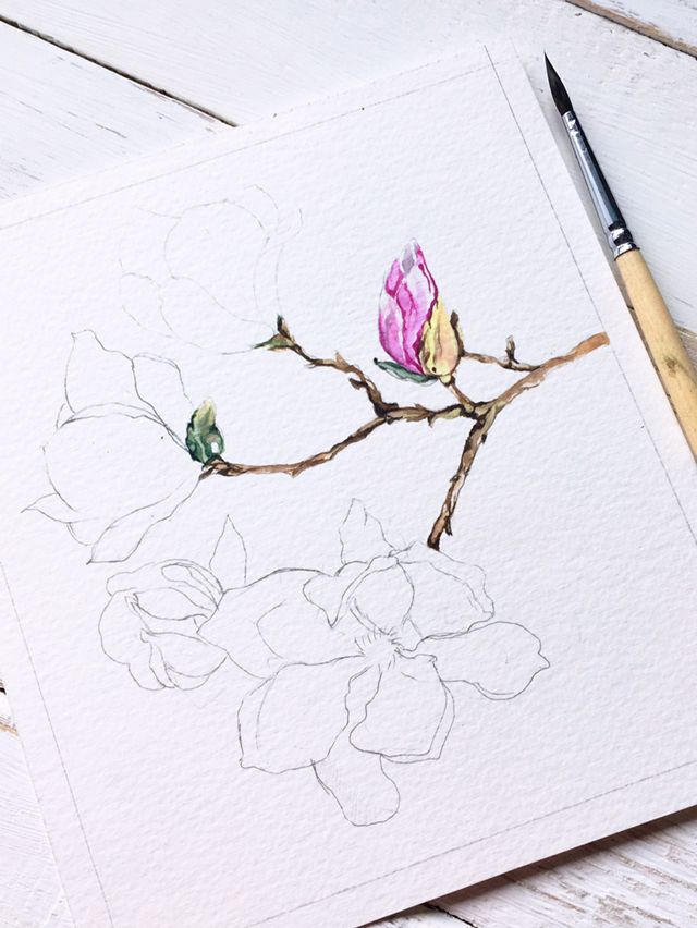 Watercolor magnolia painting in process