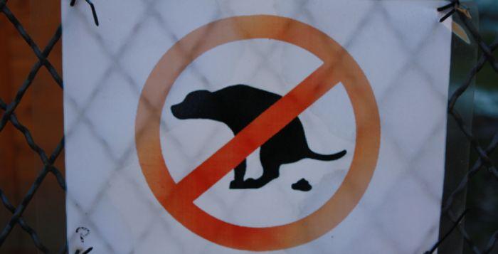 """Roma: il Codacons contro il degrado, """"porteremo le feci di cane al Sindaco"""""""