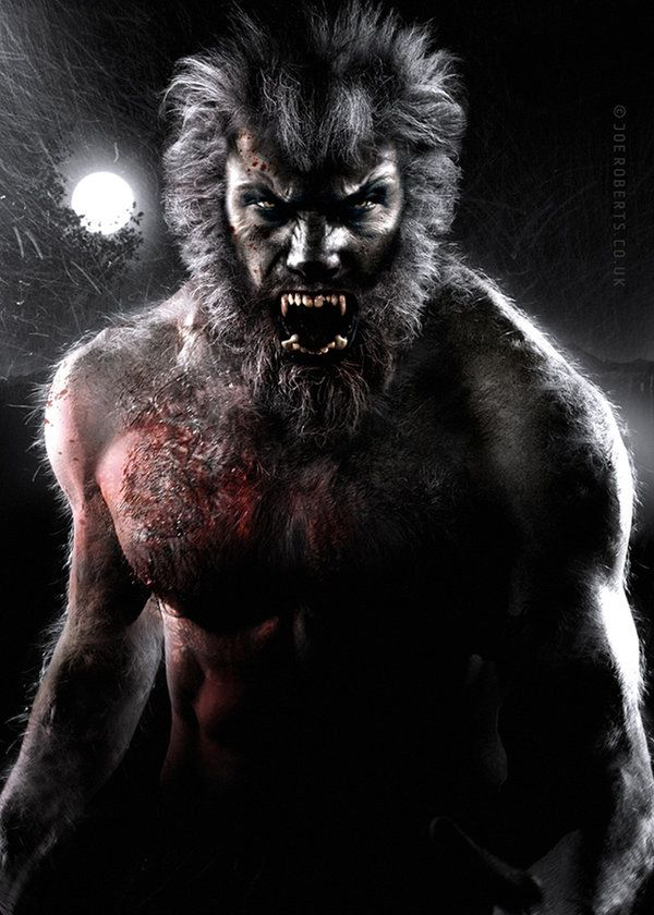 "Werewolf by Joe-Roberts  --A werewolf, also known as a lycanthrope  ""wolf"",  anthrōpos, ""man""), is a mythological or folkloric human with the ability to shapeshift into a wolf or a therianthropic hybrid wolf-like creature, either purposely or after being placed under a curse or affliction (e.g. via a bite or scratch from another werewolf). Early sources for belief in lycanthropy are Petronius and Gervase of Tilbury."