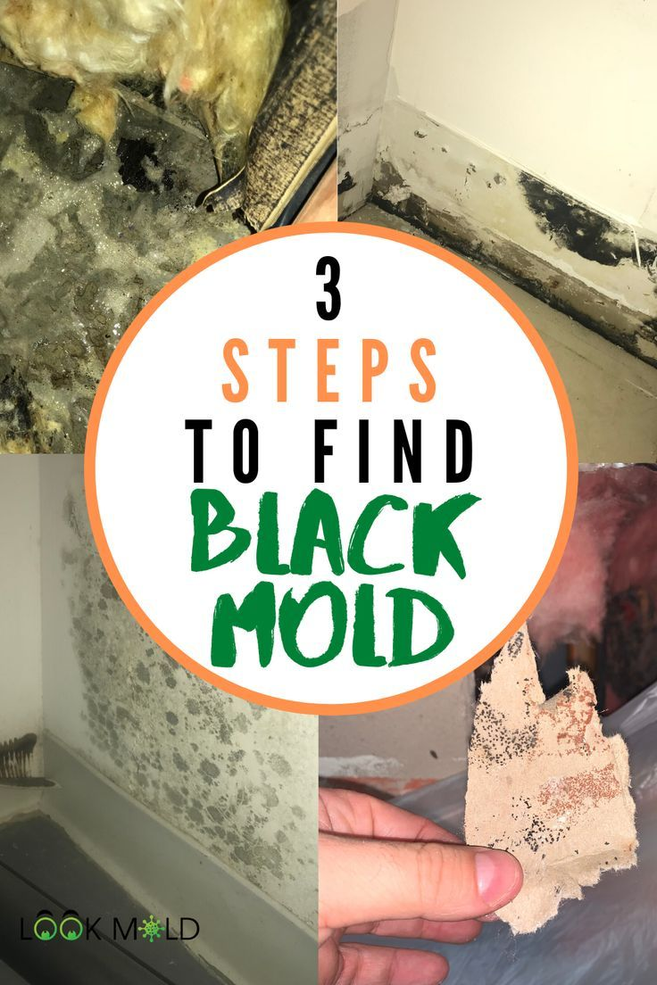 How To Identify Black Mold Top 3 Indications You May