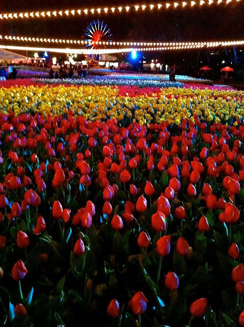 Floriade Nightfest, Canberra, ACT.