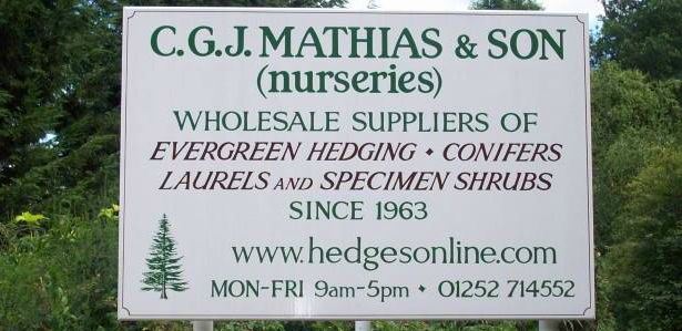 Laurel and Leylandii Hedging for Sale – Evergreen Hedging Plants | Hedgesonline.com