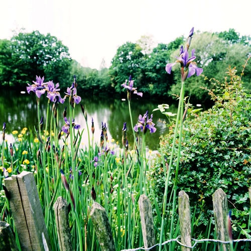 Kenwood Ladies' Pond on Hampstead Heath - the most beautiful place to swim outdoors in London.