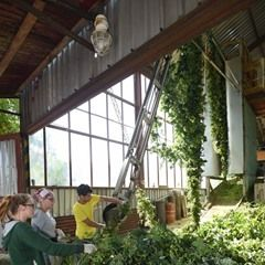Hops harvest is underway at Podlesi agricultural cooperative in Czech Republic