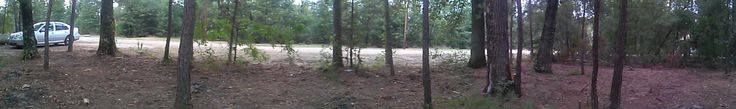 Panoramic View Of Woodlands Lot Underbrush removal in Livingston, TX #kubota #tractor