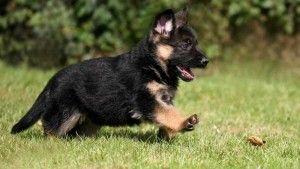 Nombre de perros machos originales con su significado