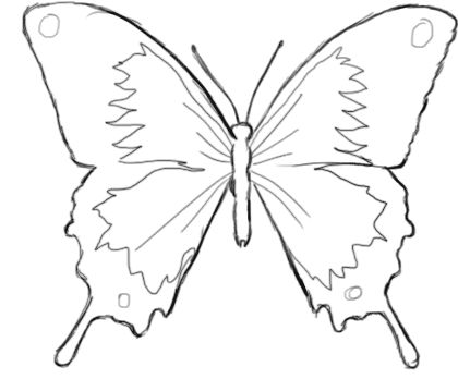 32 best images about dessin insectes papillons on - Dessin d un papillon ...