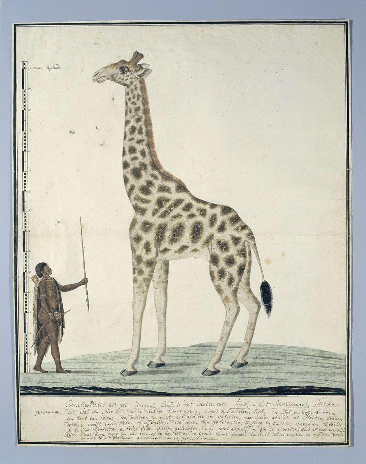 Giraf (Giraffa camelopardalis), met links een Hottentotkrijger (Khoekhoen), Robert Jacob Gordon, 1779