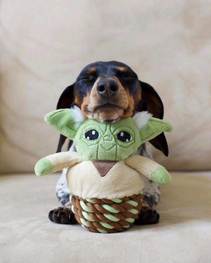 Livin' La Vida Yoda  #MayTheFourthBeWithYou