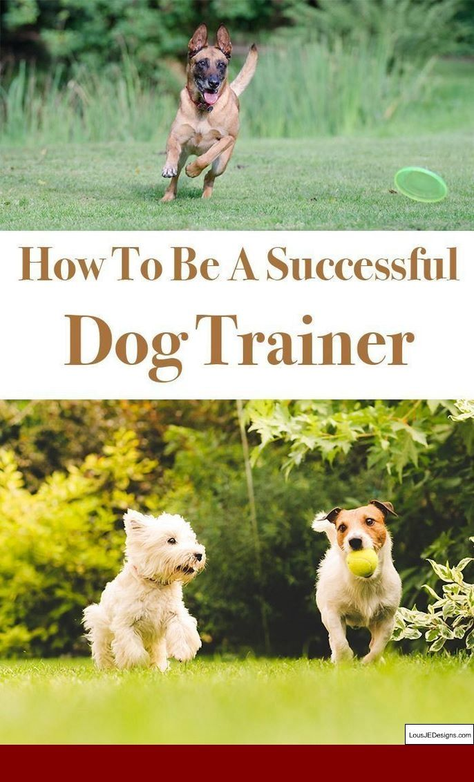 How To Train Your Dog To Go Potty In One Spot And Pics Of How To