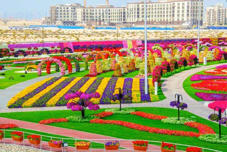 Il Miracle Garden a Dubai. Il più grande giardino naturale di fiori al mondo!