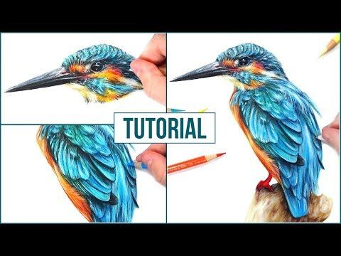 How to draw, color a Bird with PanPastel…