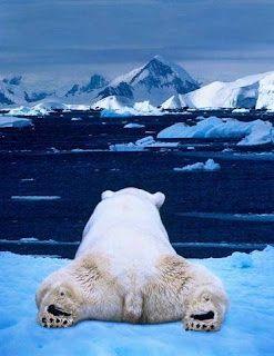Polar Bear -