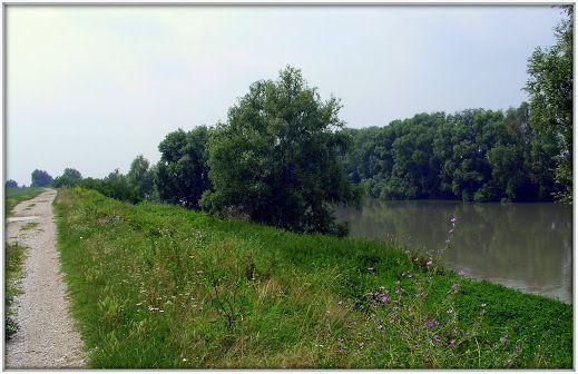 Sulle rive dell'Adige presso Cavarzere