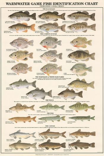 Warm water Game Fish ID Chart (To order: http://www.nature-discovery.com/warmwater-game-fish-identification-poster)
