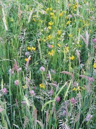 Species-rich meadows