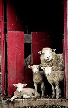 (via Aile koyun Batı Virginia | Charlotte Geary Fotoğraf)