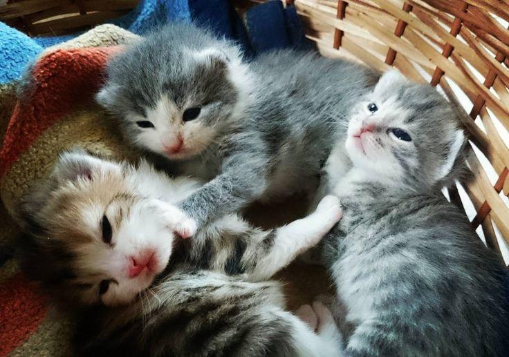 Unser Nachwuchs ist da Flizi Schnuki und Manzi #baby #katze #tiere #landleben #süses #haustier #yolo #animals #cat #instafollow #sweet by hausgemachte_leckereien http://www.australiaunwrapped.com/
