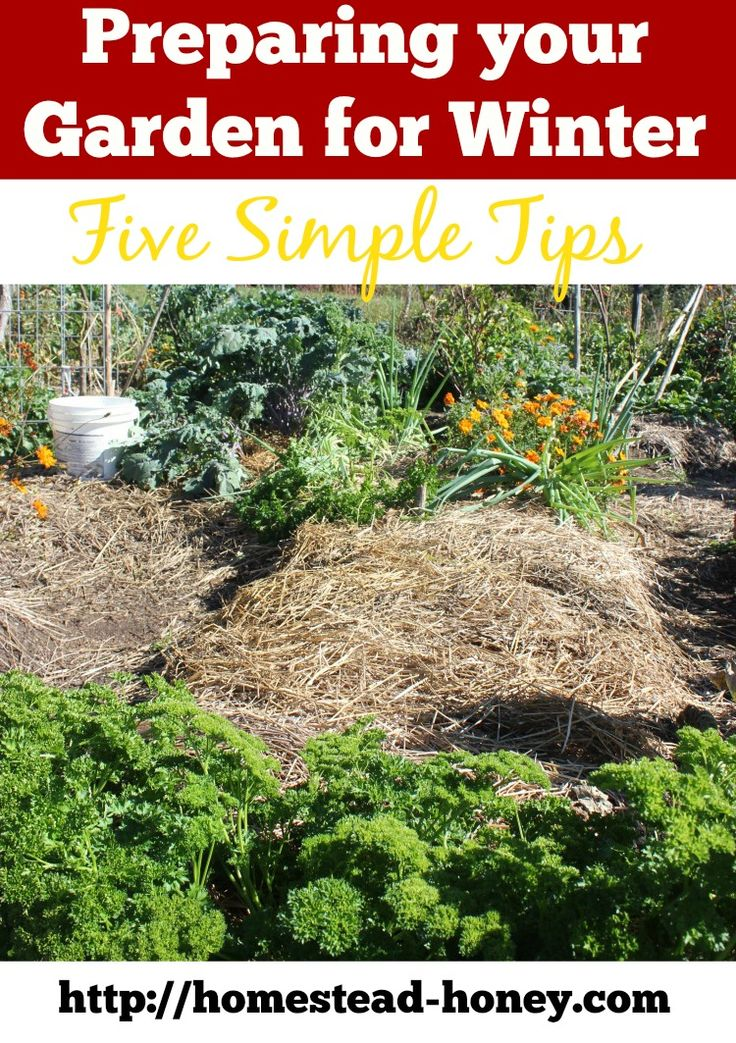 1000 images about gardening in fall winter on pinterest - Prepare vegetable garden for winter ...