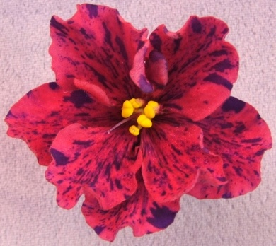 212 Best Images About Flowers African Violets On
