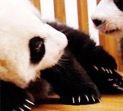 Lyrics To Panda By Future Funny Gif #1611 - Funny Panda Gifs| Funny Gifs| Panda Gifs