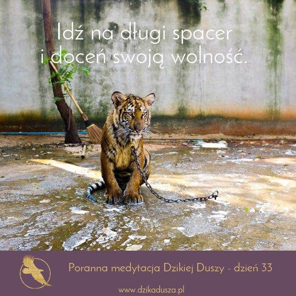 PORANNA MEDYTACJA - Dzika Dusza